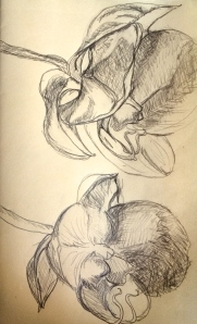 """Orchid Study #1""  Pencil on paper"