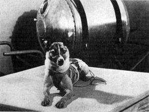 Perros-famosos-II.-Laika