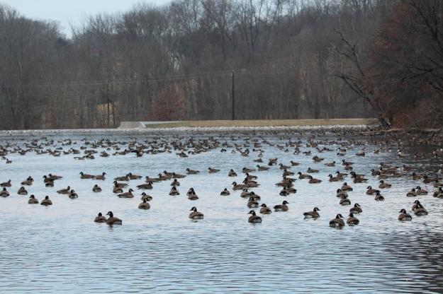 geese-large-shot