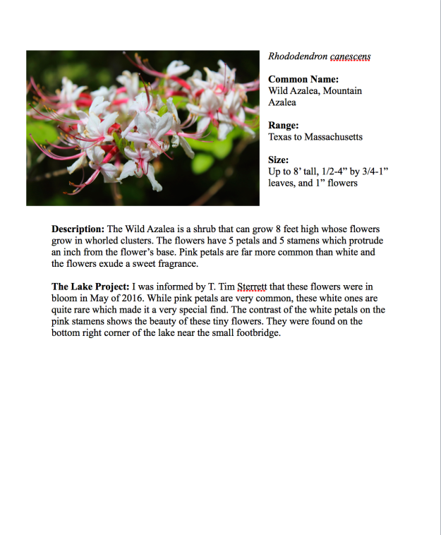 pdf-sample-page